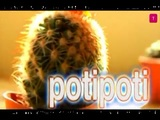 potipoti now lives in Mite, Berlí­n