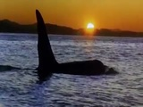 'Liberad a Willy' (Free Willy) - Trailer VO