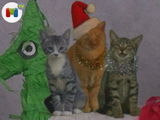 Vuelven los Jingle Cats